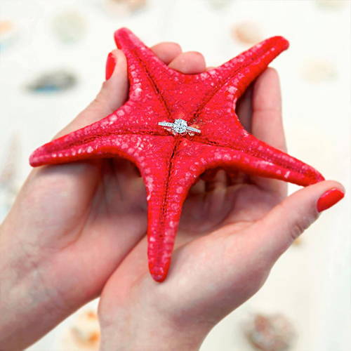 Schiffman's Engagement Ring in a Starfish