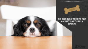Do CBD Dog Treats For Anxiety Actually Work?