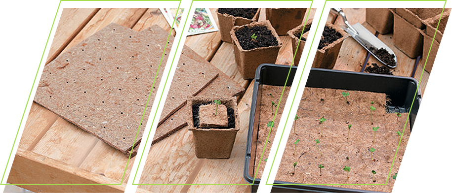 A plant cover being applied to newly sprouted plants