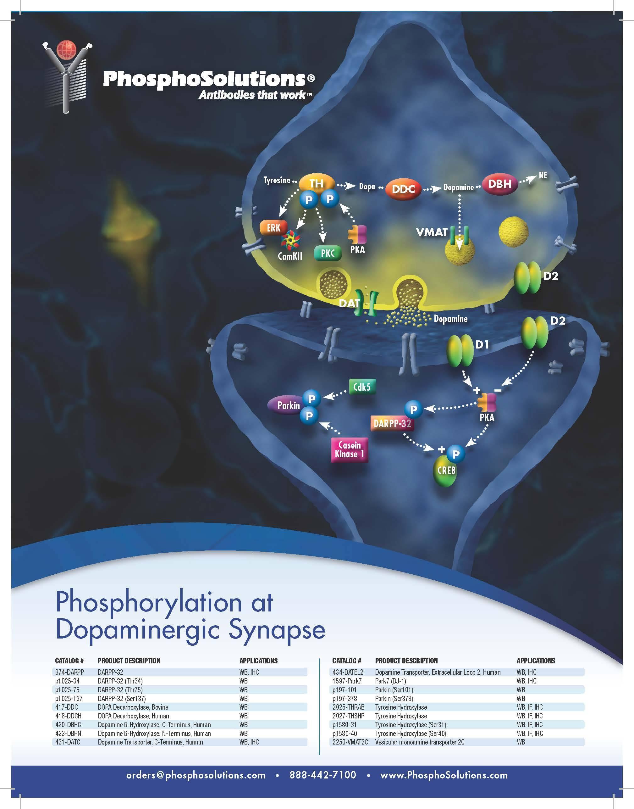 Dopaminergic synapse