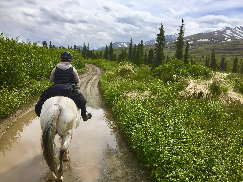 Arctic Horse horse trekking trail riding denali alaska windy creek camping with horses
