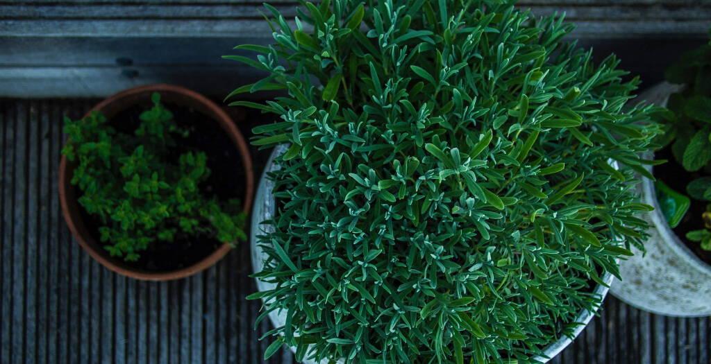Community Herbalist Certification