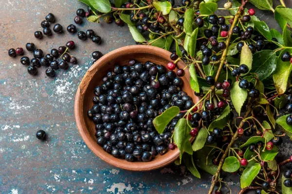 Maqui Berry 5 Health Benefits From This Antioxidant Rich Fruit