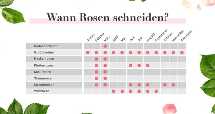 Rosen Schneiden Kalender