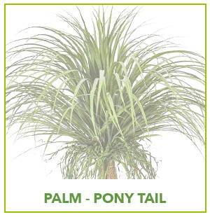 ARTIFICIAL PONY TAIL PALM PLANTS
