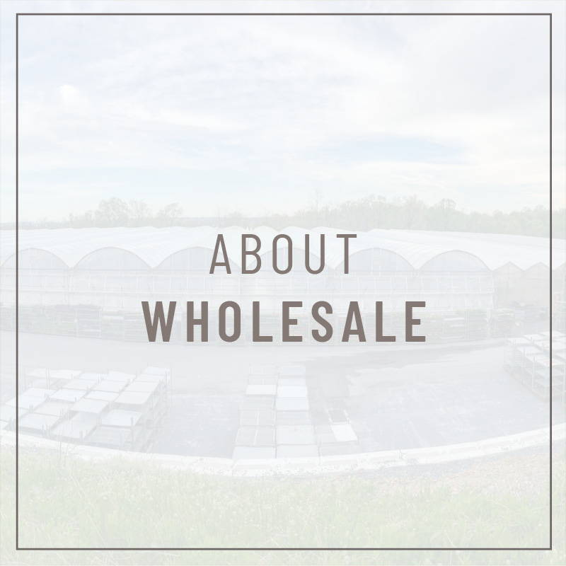 About Wholesale