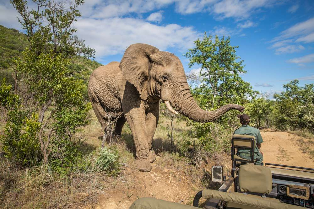 Travelbay Southern Africa Private Tours - Elephant on safari, Kruger National Park