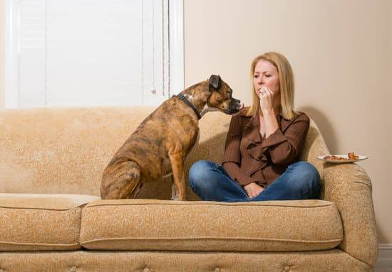 Annoying Dog Behavior Habits: How to Stop Dog Begging