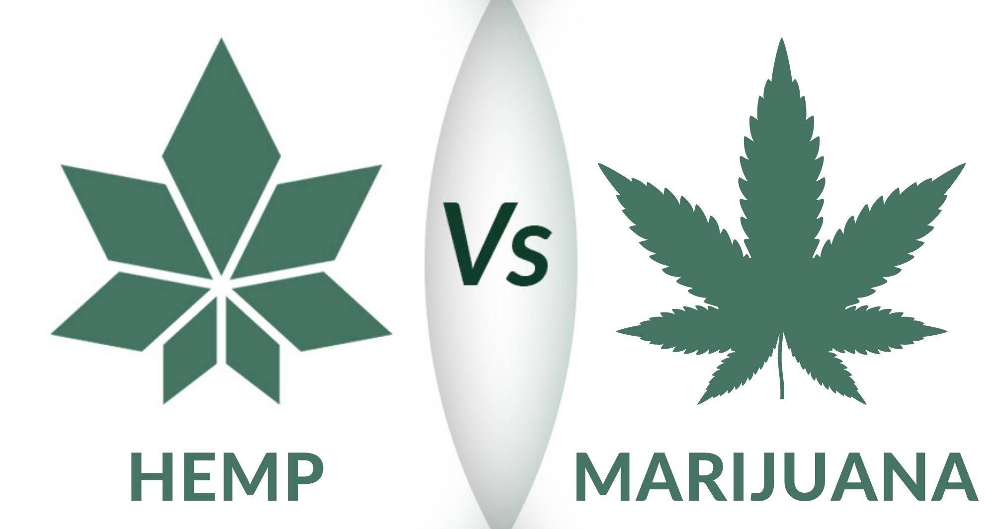 Hemp vs marijuana logo by WAMA Underwear