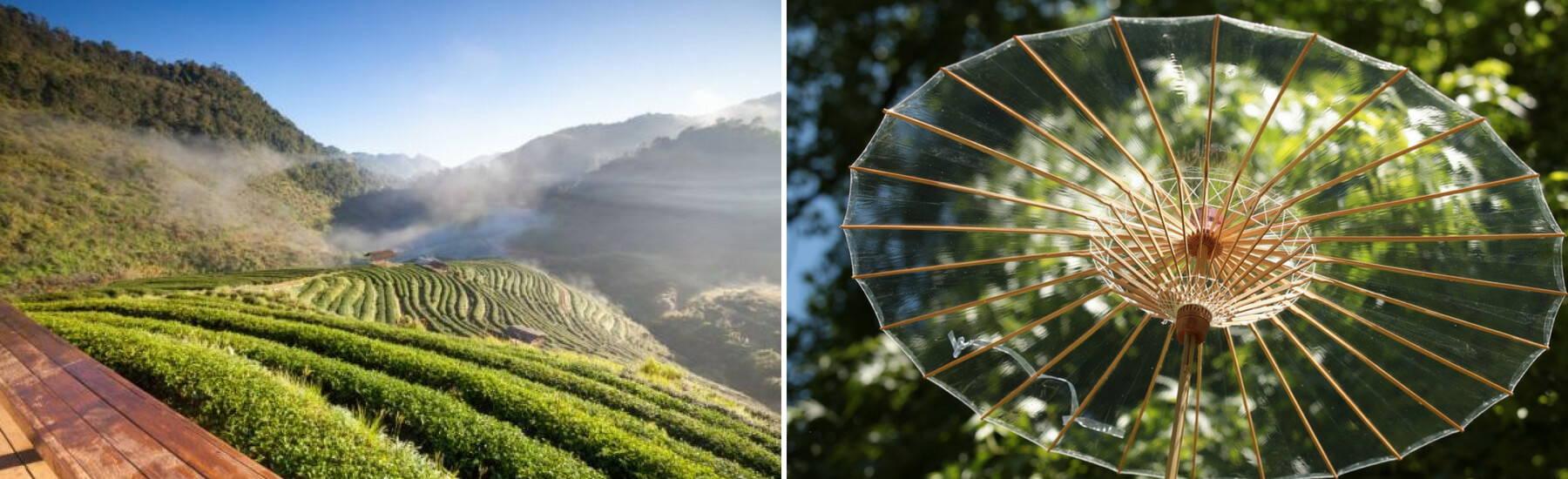 BRELLI, the perfect luxury eco-umbrella, @ Ecoture