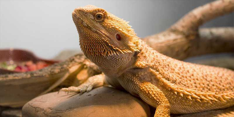 Reptile Supplies   Live Food   Next Day Delivery   Internet Reptile