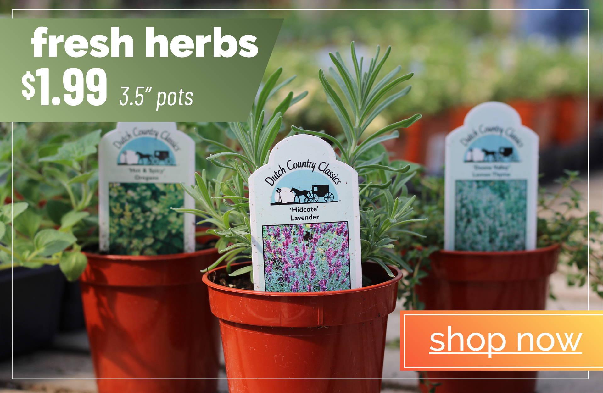 Fresh Herbs - Shop Now