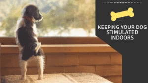 Keeping Your Dog Stimulated indoors
