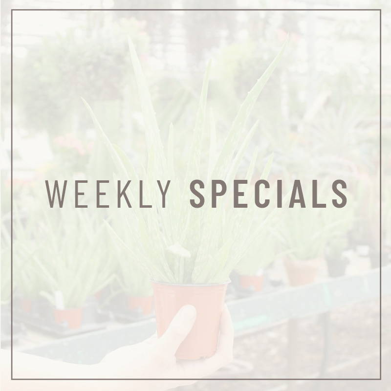 Weekly Store Specials