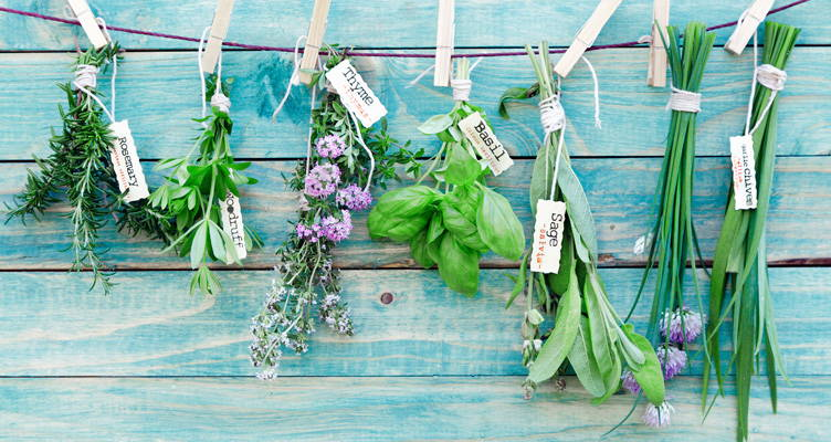 Herbs for Fragrance, Flavour and Decoration