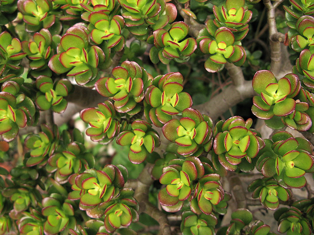 Succulent Types Succulent Of The Month Club Subscription
