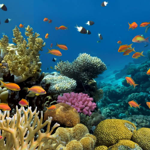 Corals And Fishes In The Sea