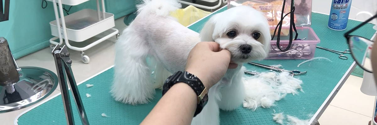 dog grooming singapore grooming photo 1