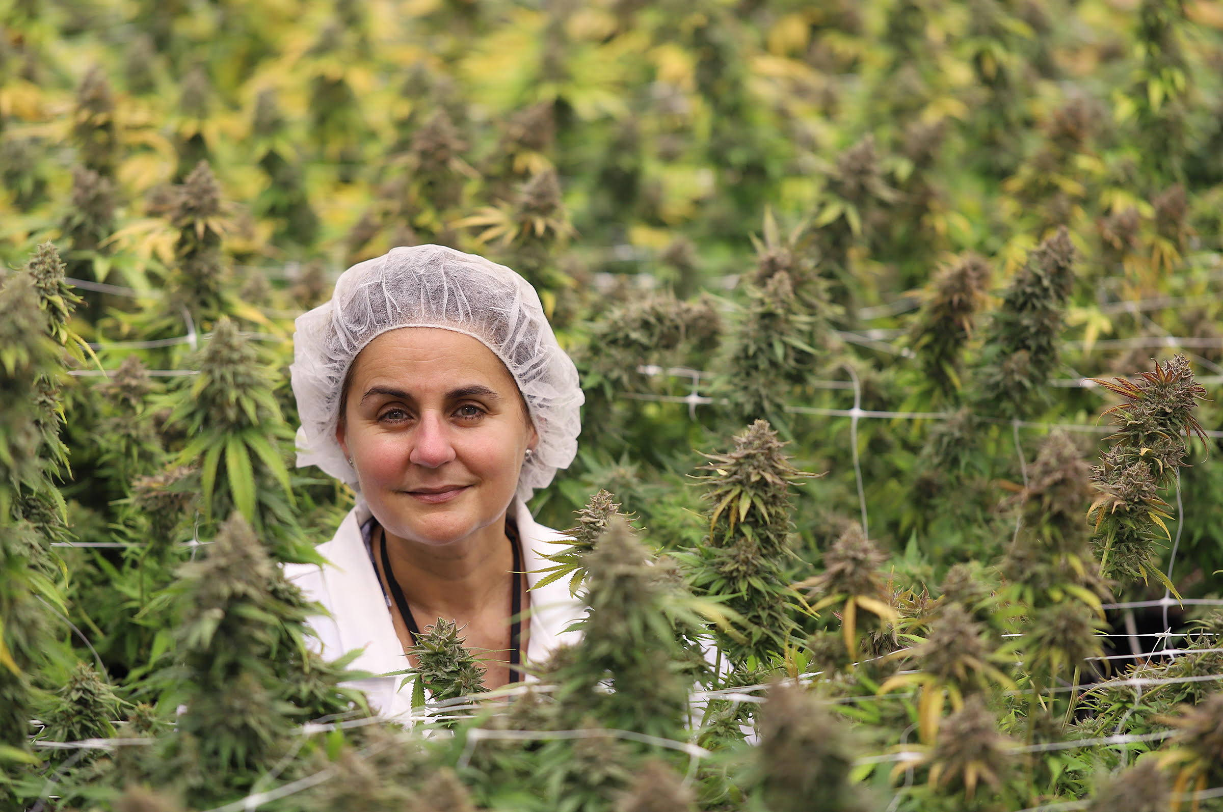 A photo of Jenn Ayotte, Maricann CEO and Master grower, surrounded by cannabis plants.