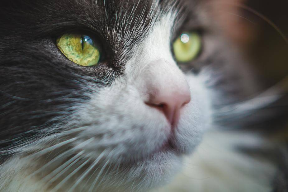Nibbs Club 13 Facts About Cats Healthy Cat Treats