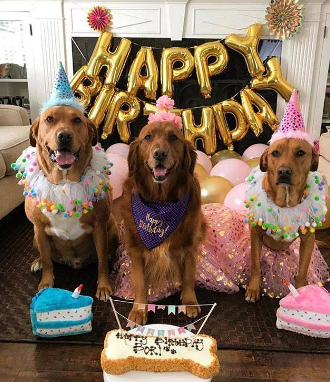 Wheat Free Dog Birthday Cake
