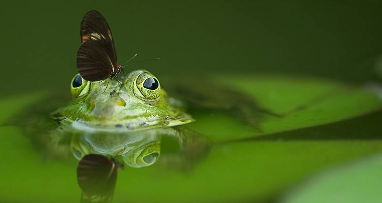10 Tips For Your Pond
