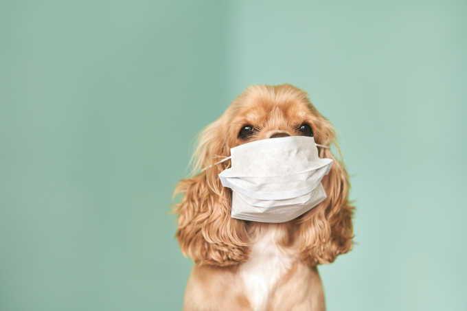 Coronavirus Safety