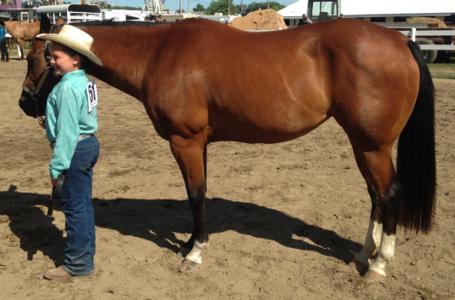 elkhart-co-4H-saddle-club-sponsor