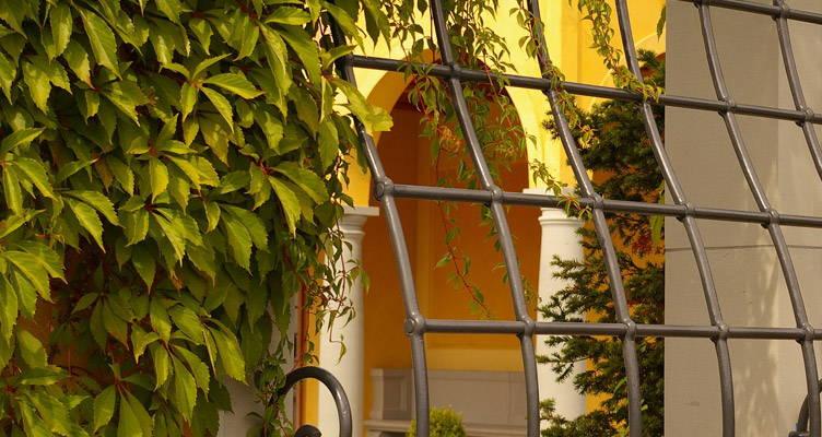 Kletterer: Ein Muss für jeden Garten