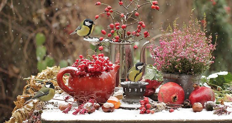 Il giardino invernale