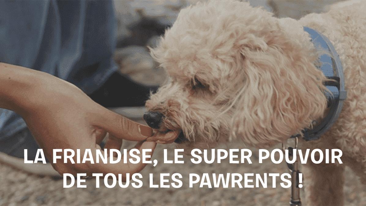 Selection-des-meilleures-friandises-pour-chien