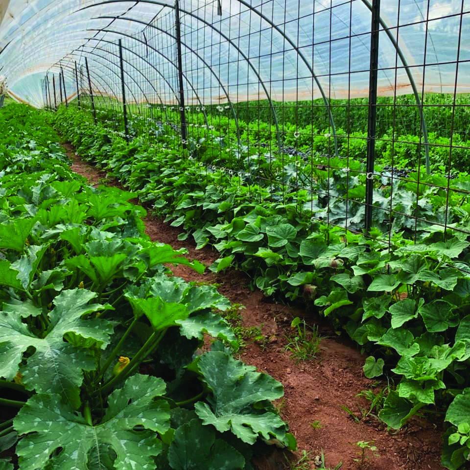 fry farm