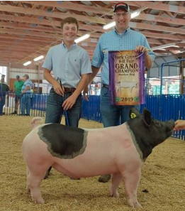 Boy and man with champion pig.