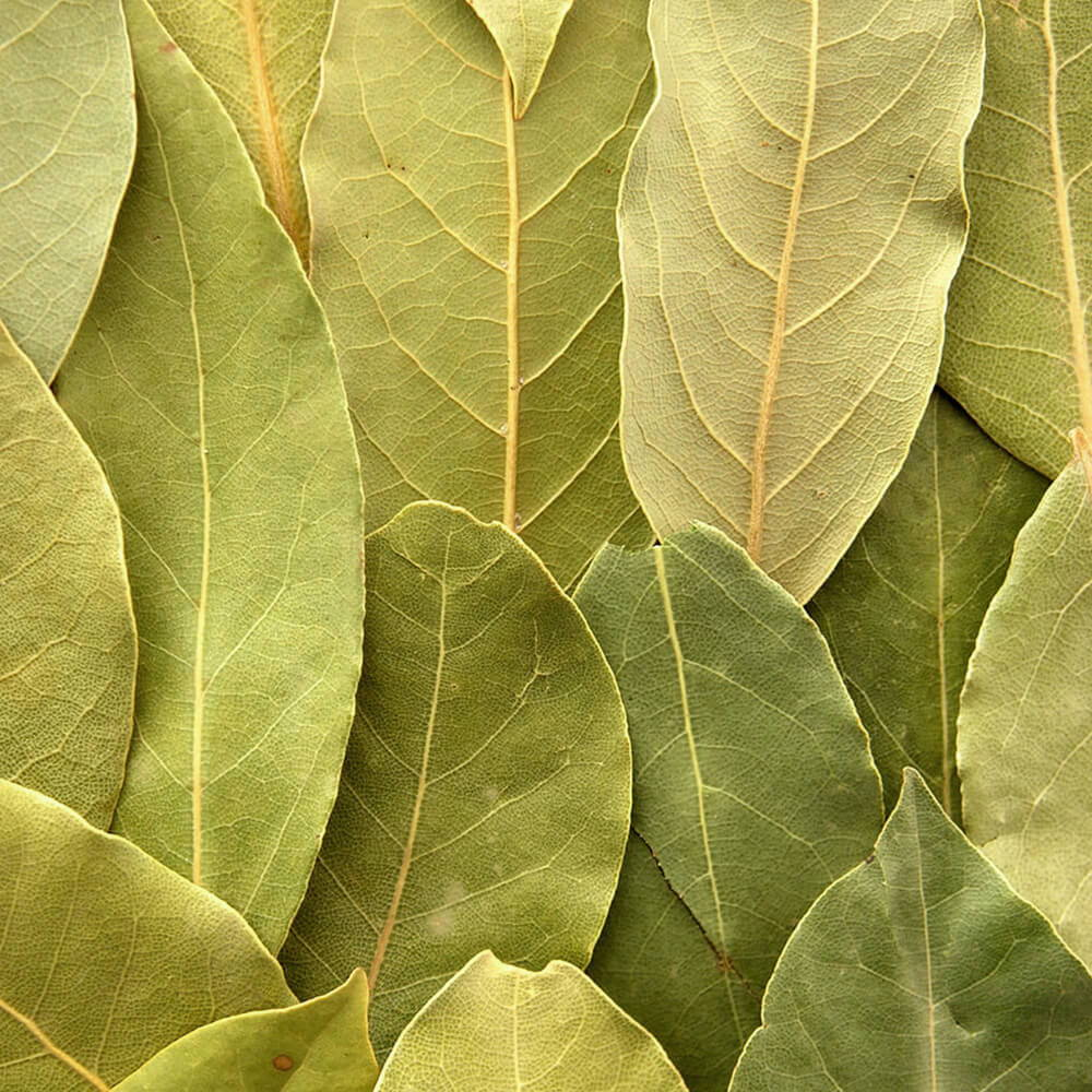 High Quality Organics Express Bay Leaf Arranged Vertically