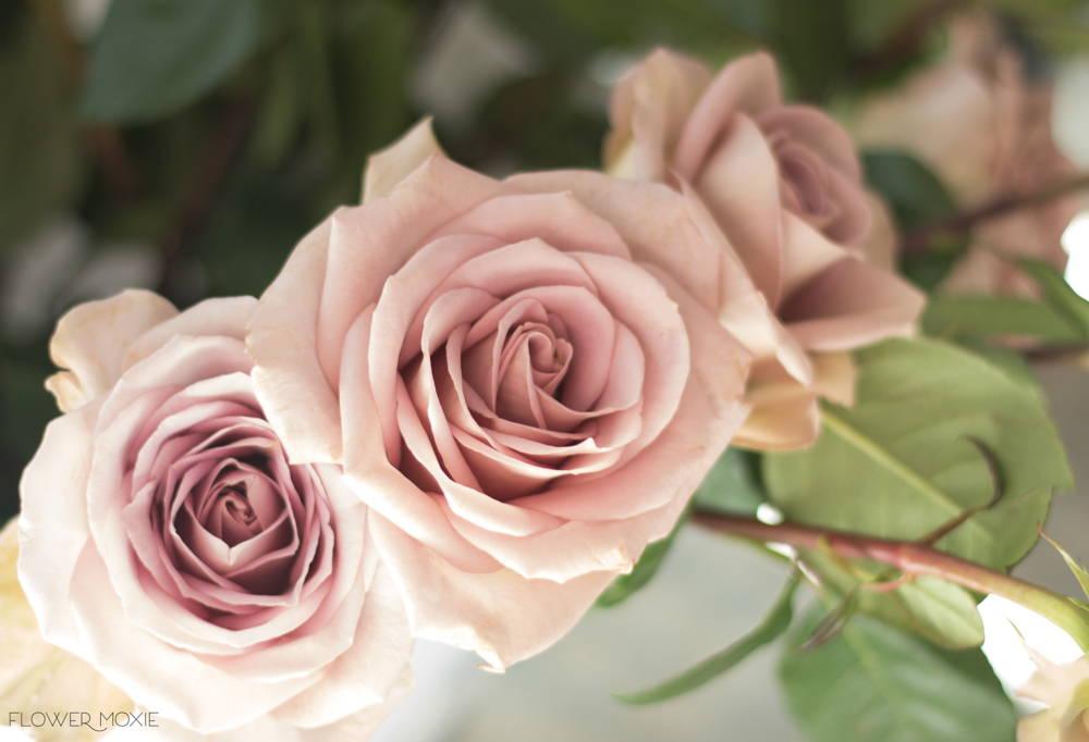 dae440e7527e Quicksand Roses