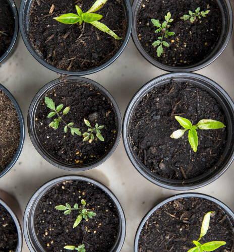 European Herbal Medicine - Earth - Year 1