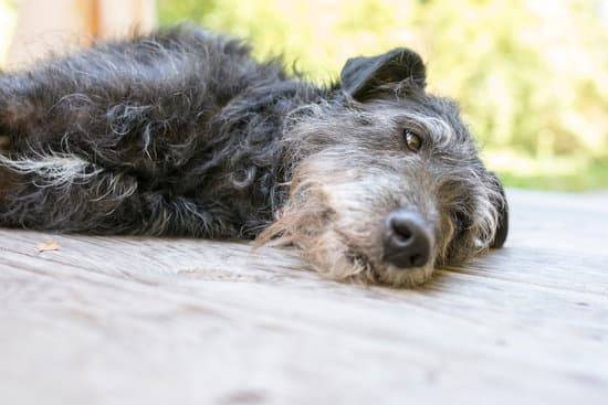 A dog lays on its side outside on a wooden deck
