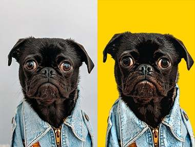 pop your pup pop art pug comparison image