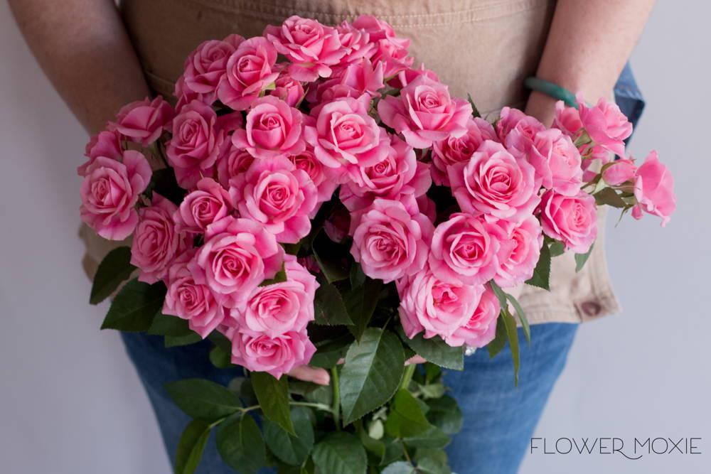 Medium Pink Spray Rose Flower