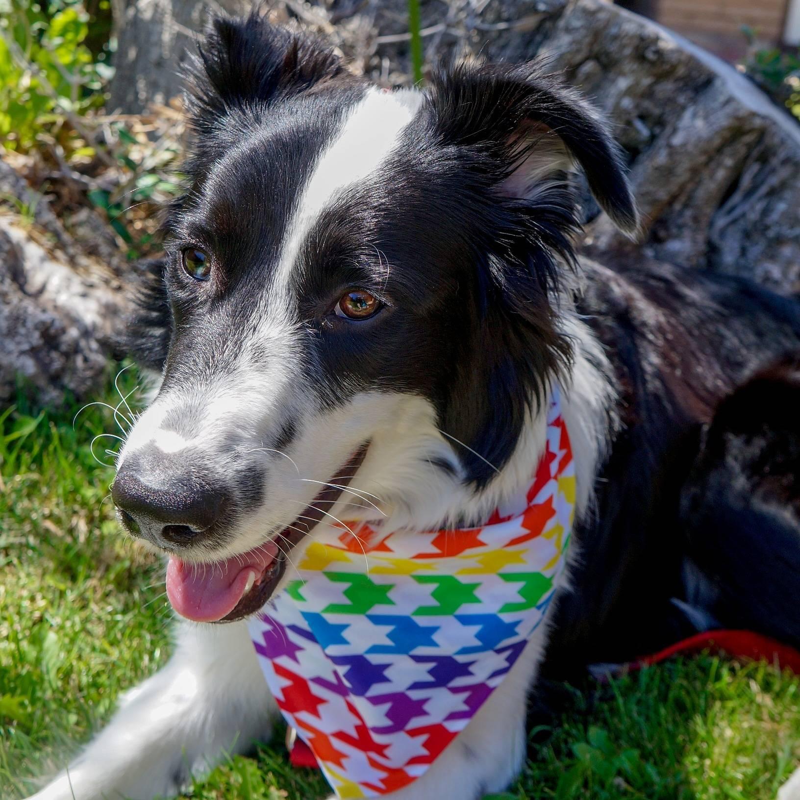 Banana Bunch dog model Hamilton Rainbow Houndstooth dog bandana