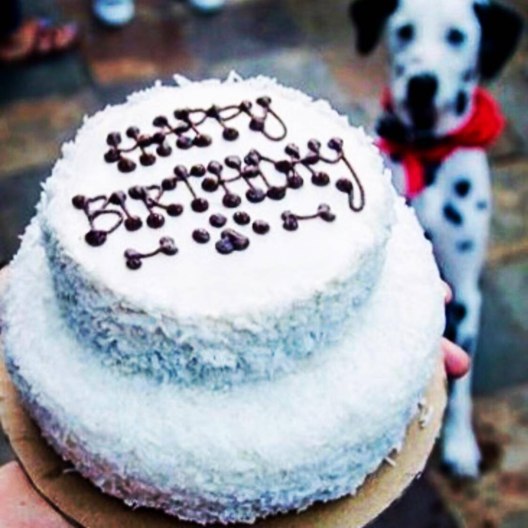 White Dog Birthday Cake