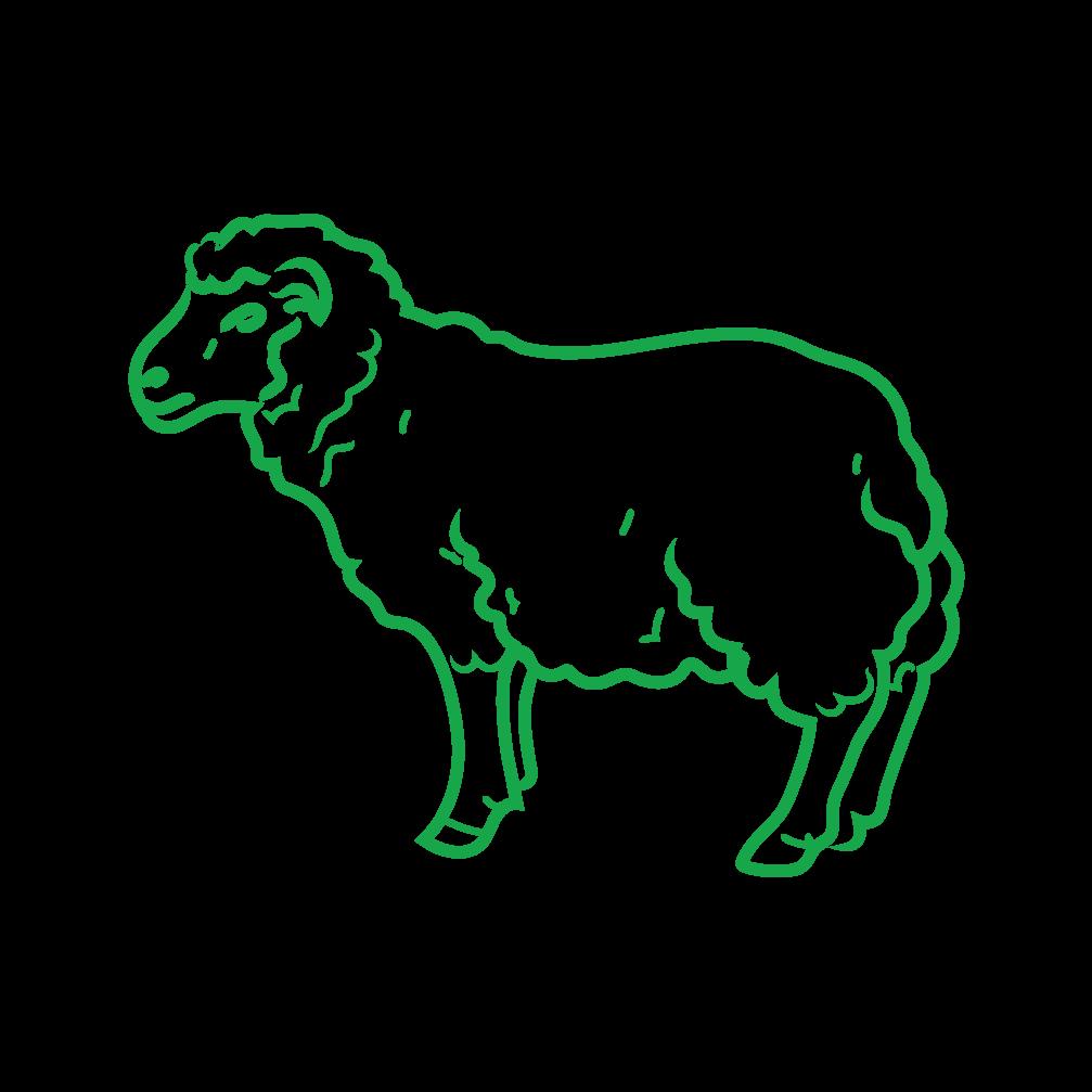 Humanely Raised Lamb