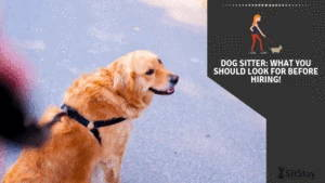 Dog Sitter: What You Should Look For Before Hiring!