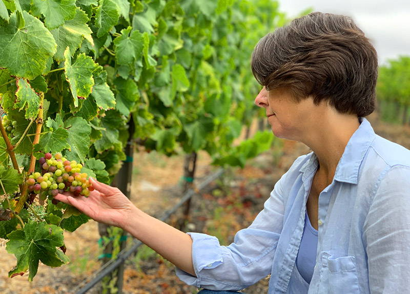 Mindy examining the ripening grape clusters.