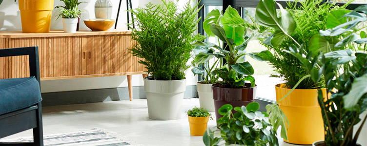 elho flower pots