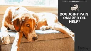 Dog joint pain: Can CBD Help?
