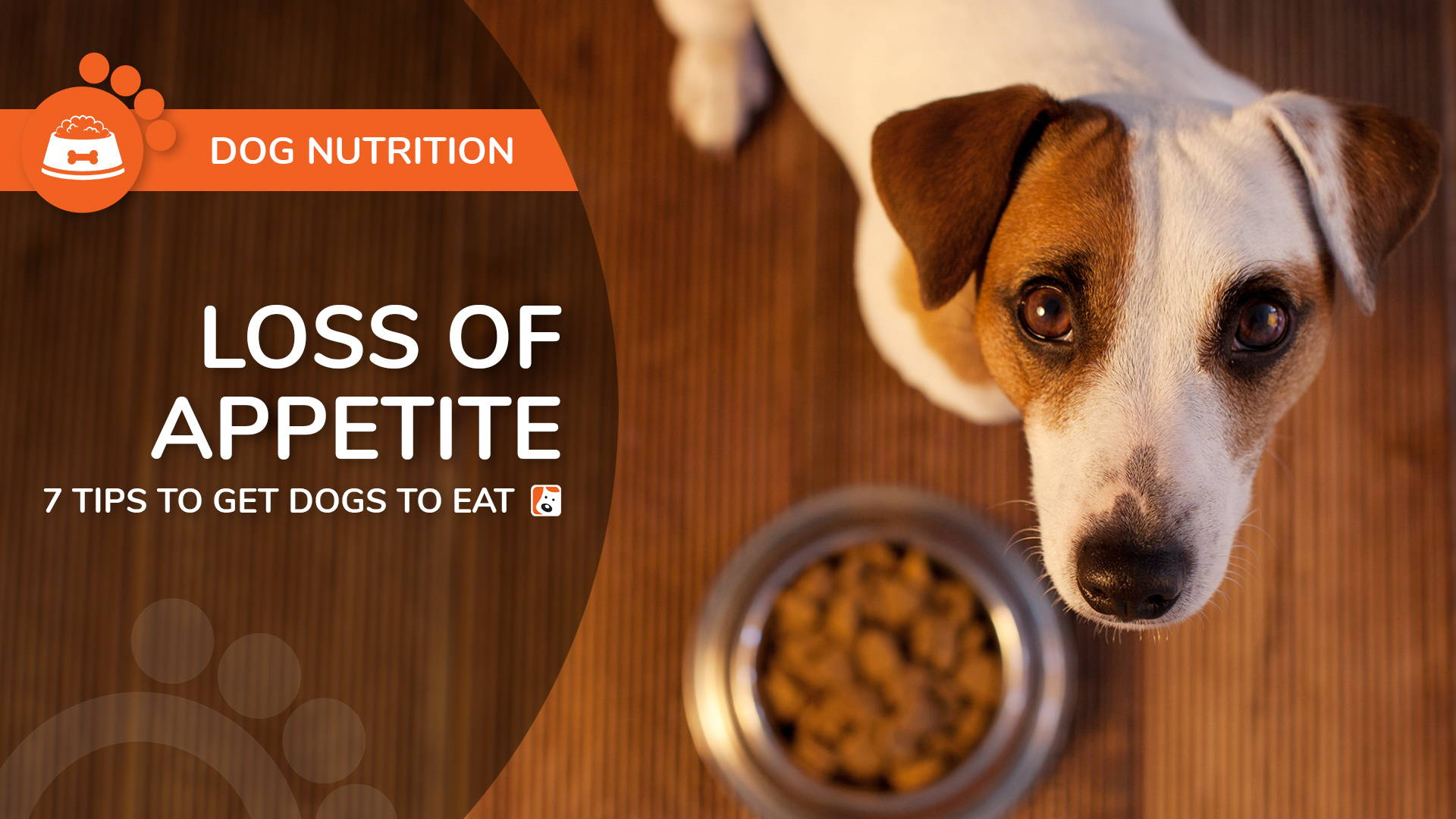 Loss of Appetite in Dogs