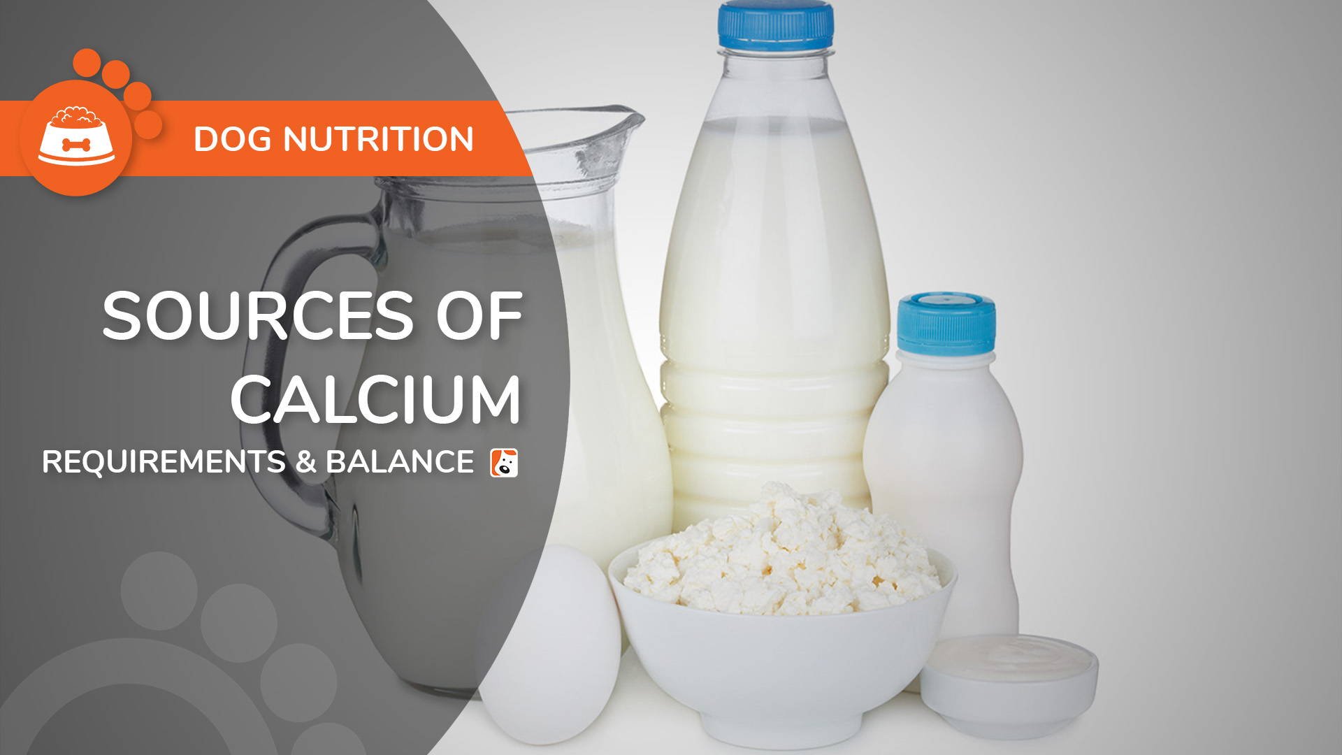 Source of Calcium for Dogs