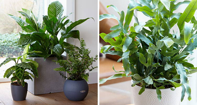 Top 10 air-purifying plants
