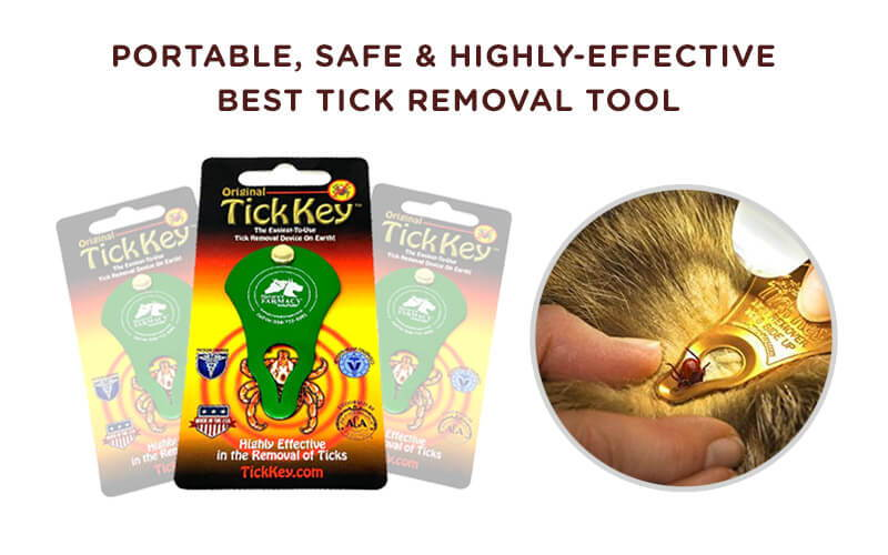 Best tick removal